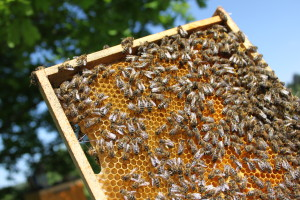 plást se včelami