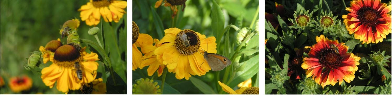 ZO ČSV  STRUHAŘOV – Včelaři z Kamenice a okolí